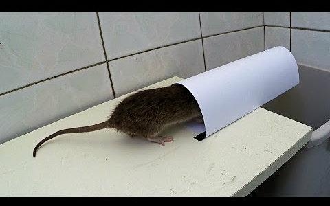 a4纸做简易捕鼠陷阱,鼠小弟多次亲身测试才成功