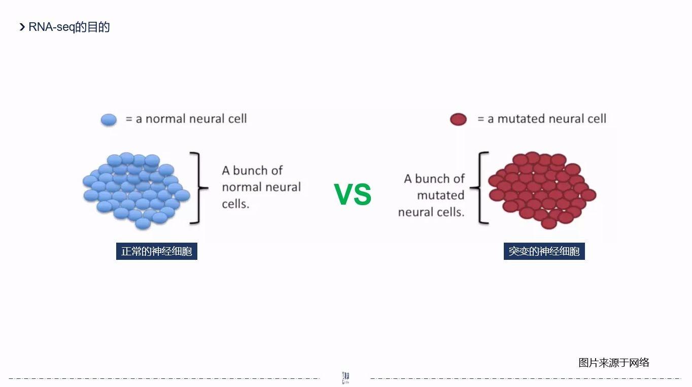 【生信分析】转录组测序:你知道什么是RNA-seq吗?8分钟告诉你答案
