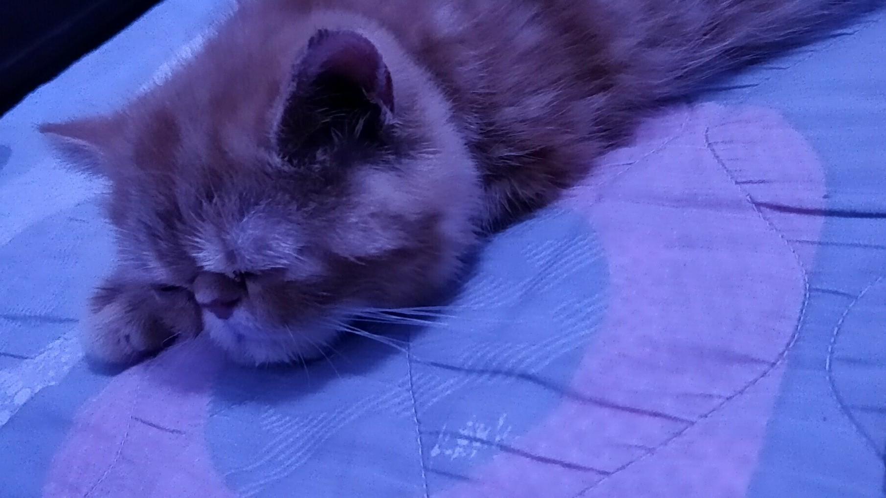 幼女舔几把_未成年幼女猫迷恋上小的的耳朵,舔着舔着居然睡着了