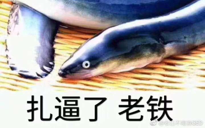 黄鳝入洞,法力无天(黄鳝女主播)一个黄鳝的悲伤故事