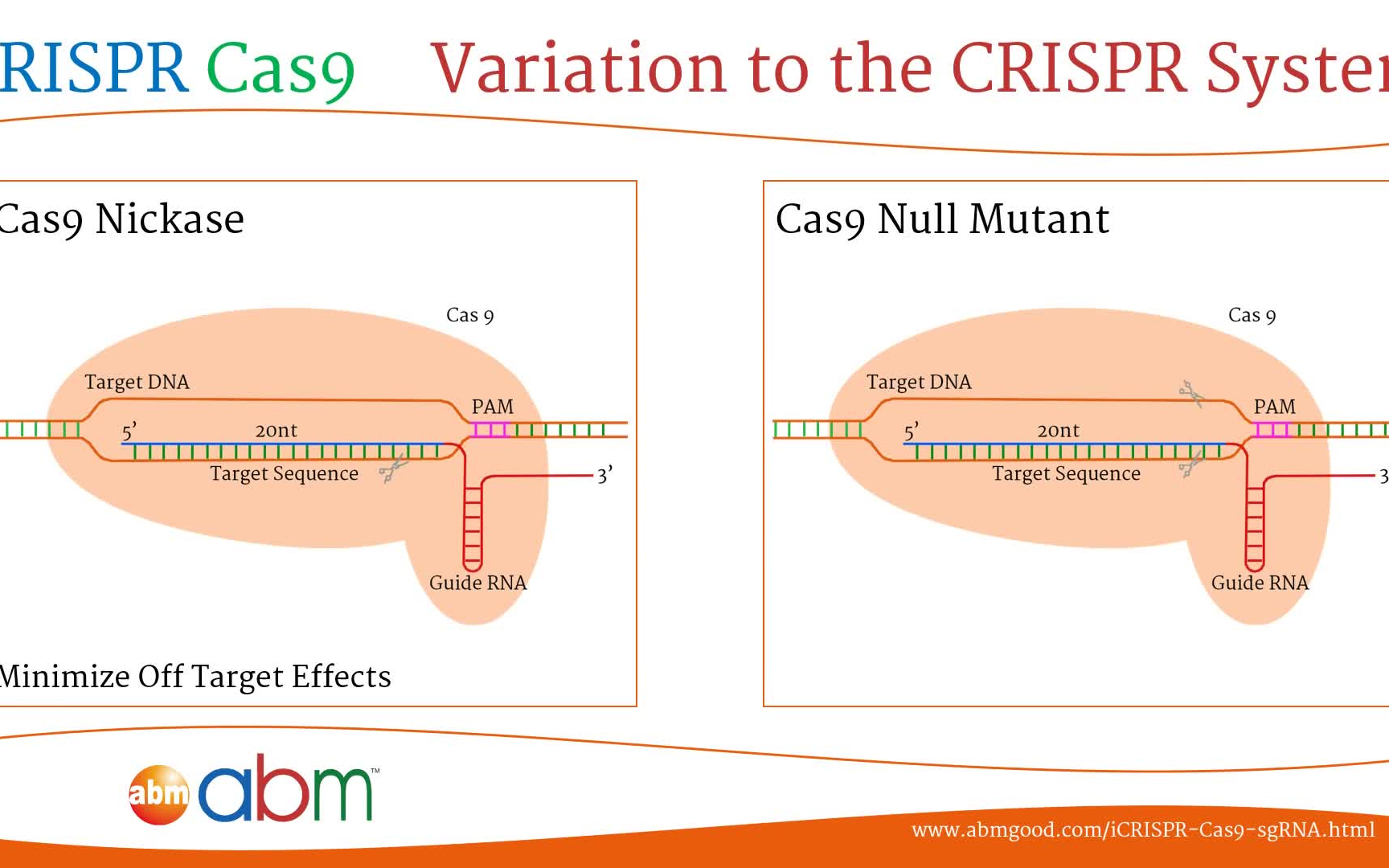 原理 crispr cas9