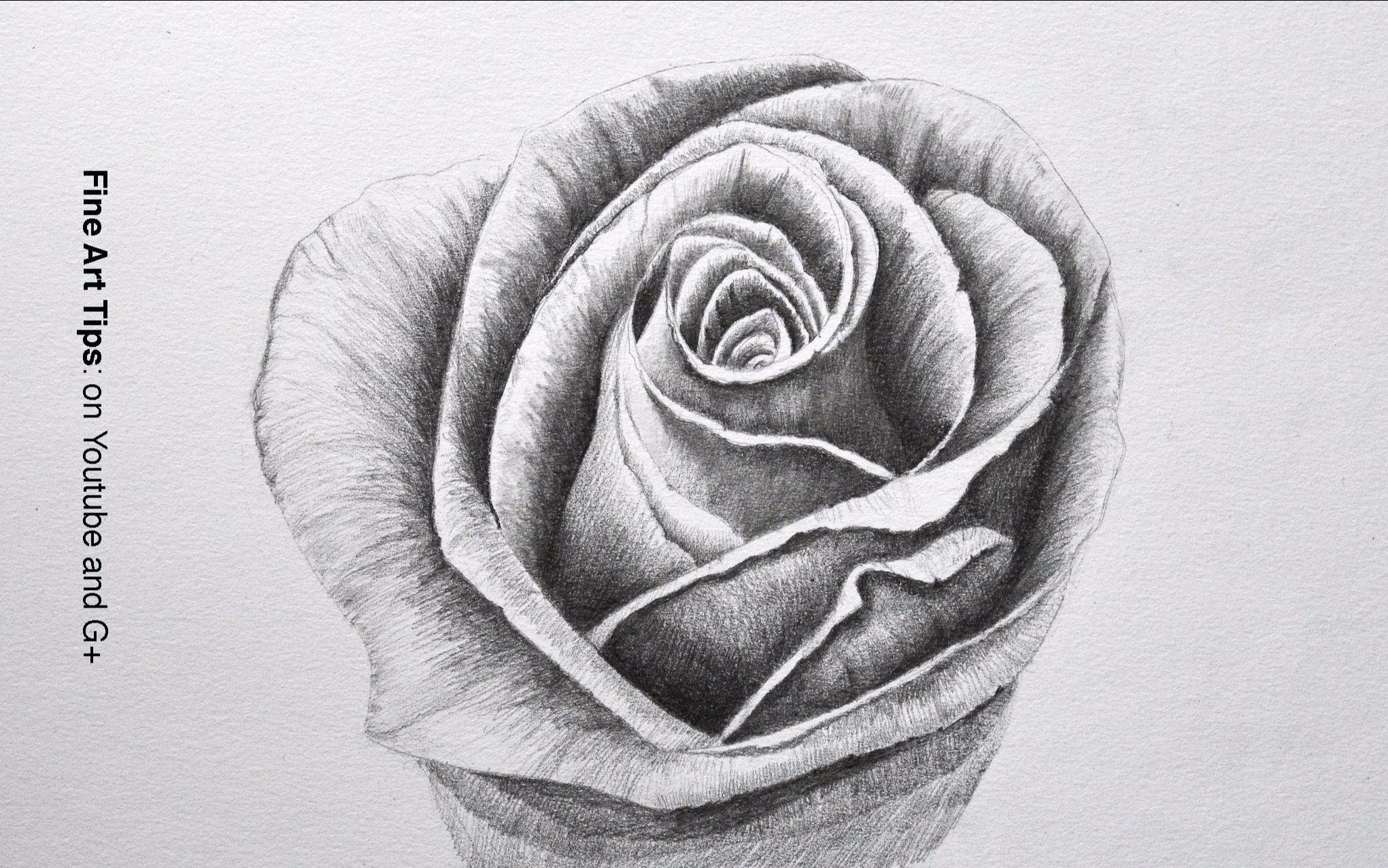 如何用铅笔画一朵玫瑰 中文字幕