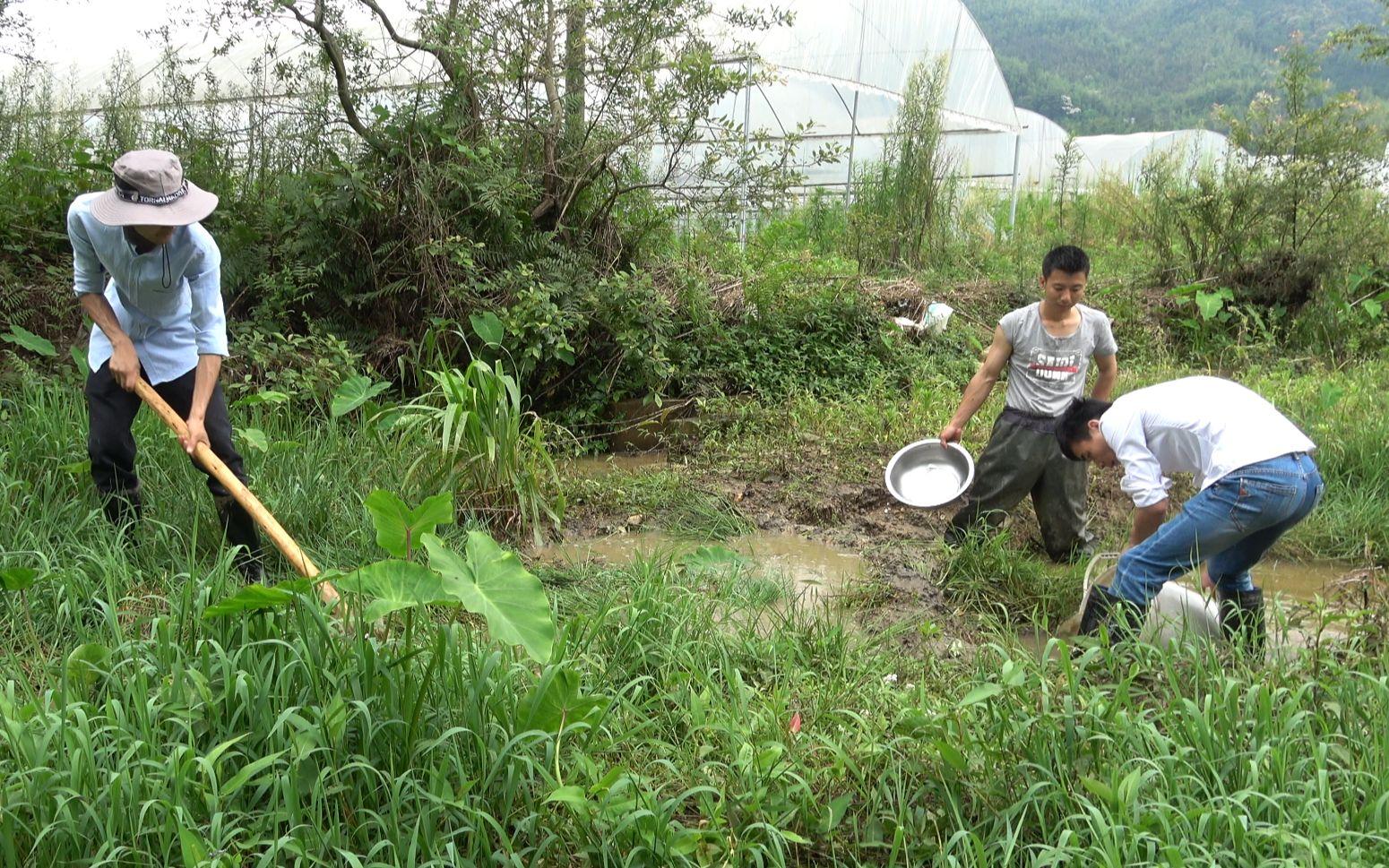 华农兄弟:发大水冲出一个水潭,跟兄弟一起把水弄干抓鱼