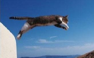 【高清】【猫奴终极福利,不看后悔系列】岩合光昭的猫步走世界(持续更新)