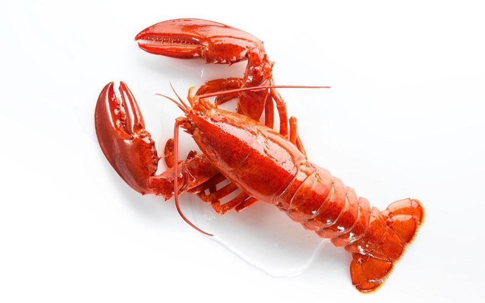 彩铅写实动物手绘彩铅写实小龙虾