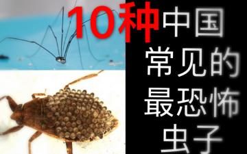 【胆小慎入】10种国内常见的最恐怖的虫子
