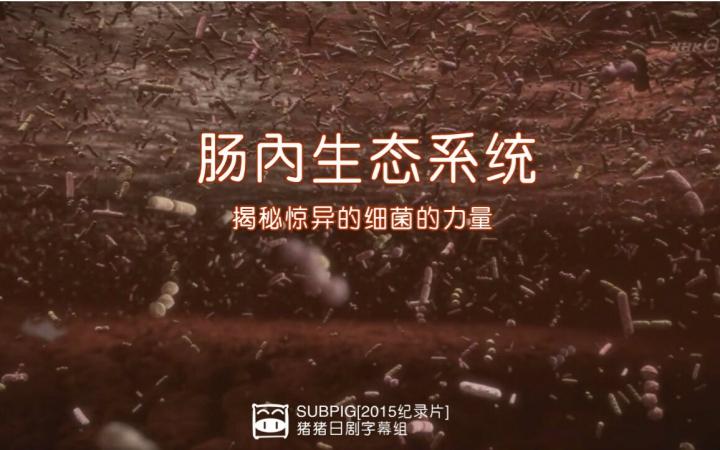 【猪猪字幕组】【2015nhk纪录片】肠内floral 揭密惊异的细菌的力量!