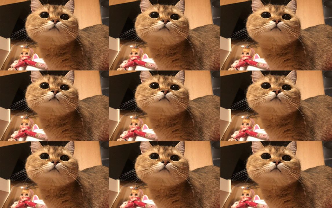 被迫营业的猫 魔性洗脑加长版(仿)