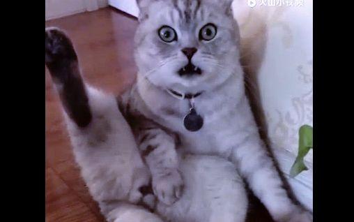 历数家中的猫狗萌宠绝望逗逼十大时刻