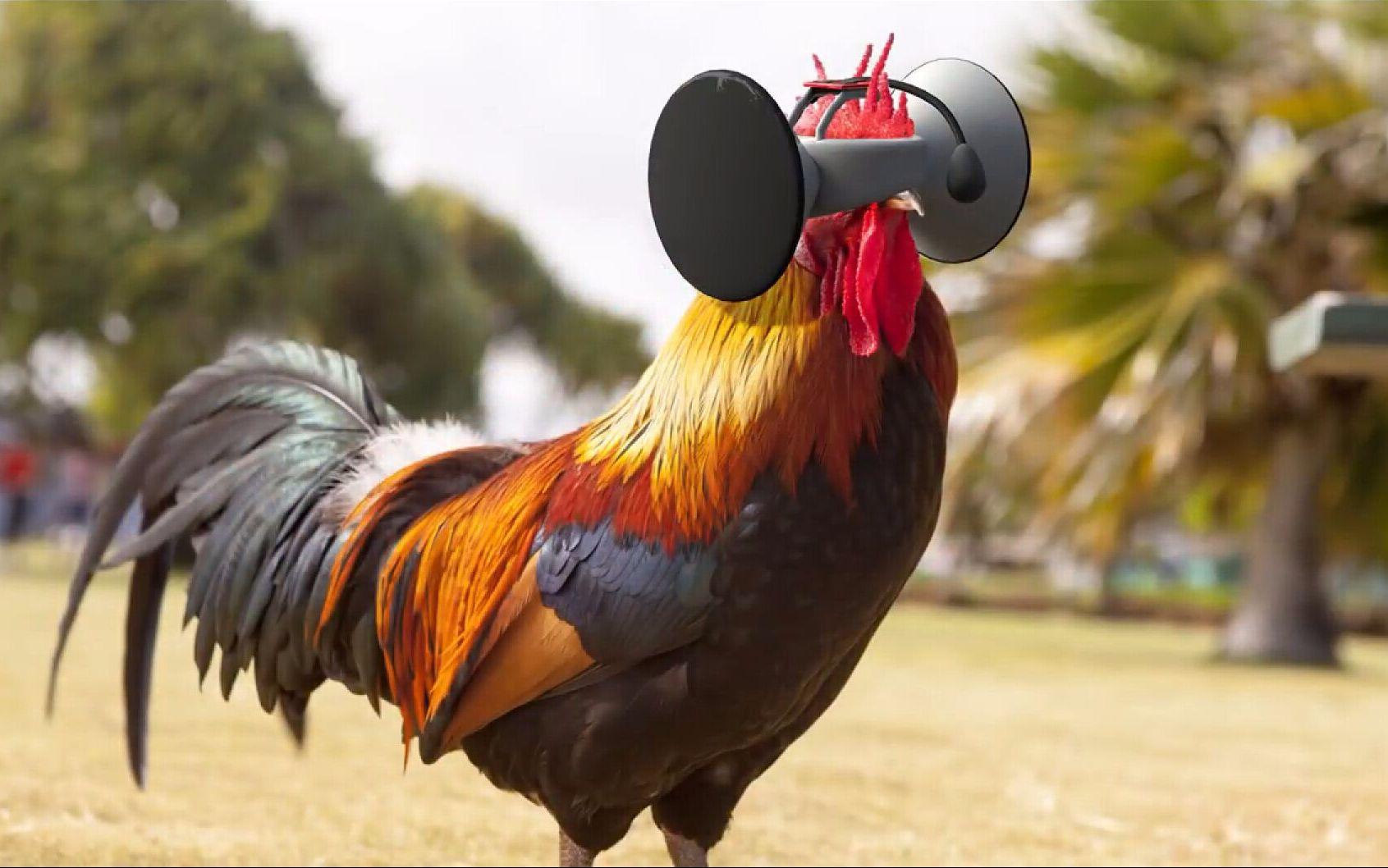 美国为鸡发明的VR眼镜,让鸡美味100倍,据说一只鸡卖5万