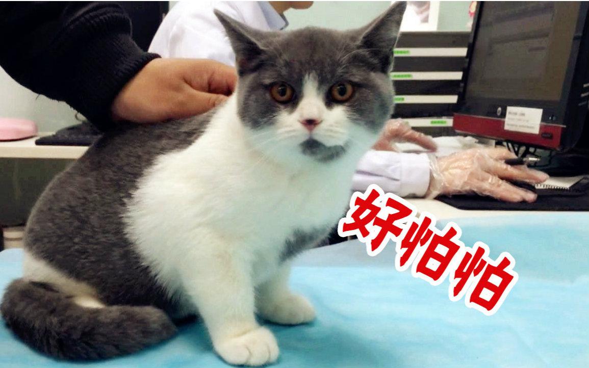 猫二联疫苗