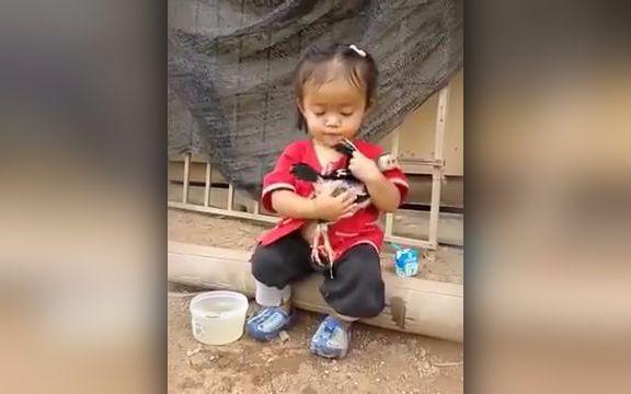 小女孩的小鸡可爱视频