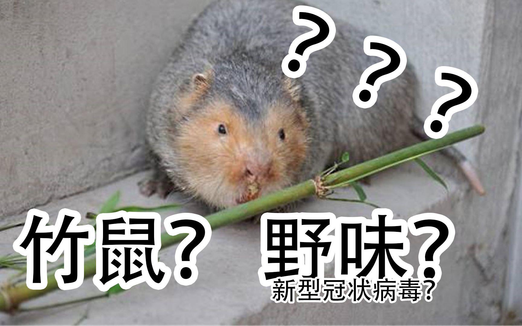 华农竹鼠是否算作野味,新型冠状病毒和野味到底有何关系?