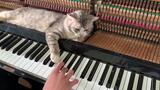 【钢琴】喵的心河(你的心河)River flows in MEOW - Piano relax meowssage by Min