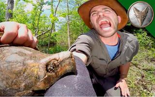 【狼叔荒野探险】被巨型鼉龟咬一口是什么体验 @柚子木字幕组
