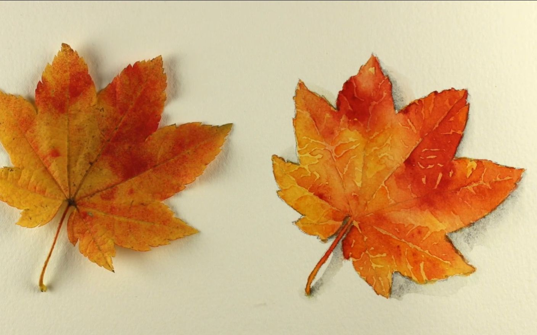 【水彩教程】水彩画一片叶子图片