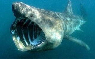 【Top15s】15个被镜头记录下来的可怕的海洋生物