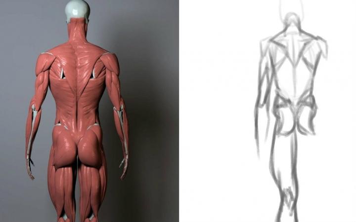 图教程,人体 速写2 补充背部肌肉和人脸