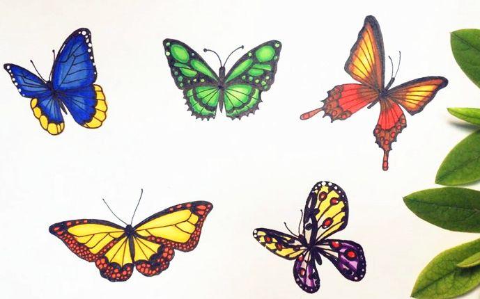 壁纸 昆虫 桌面 689 430