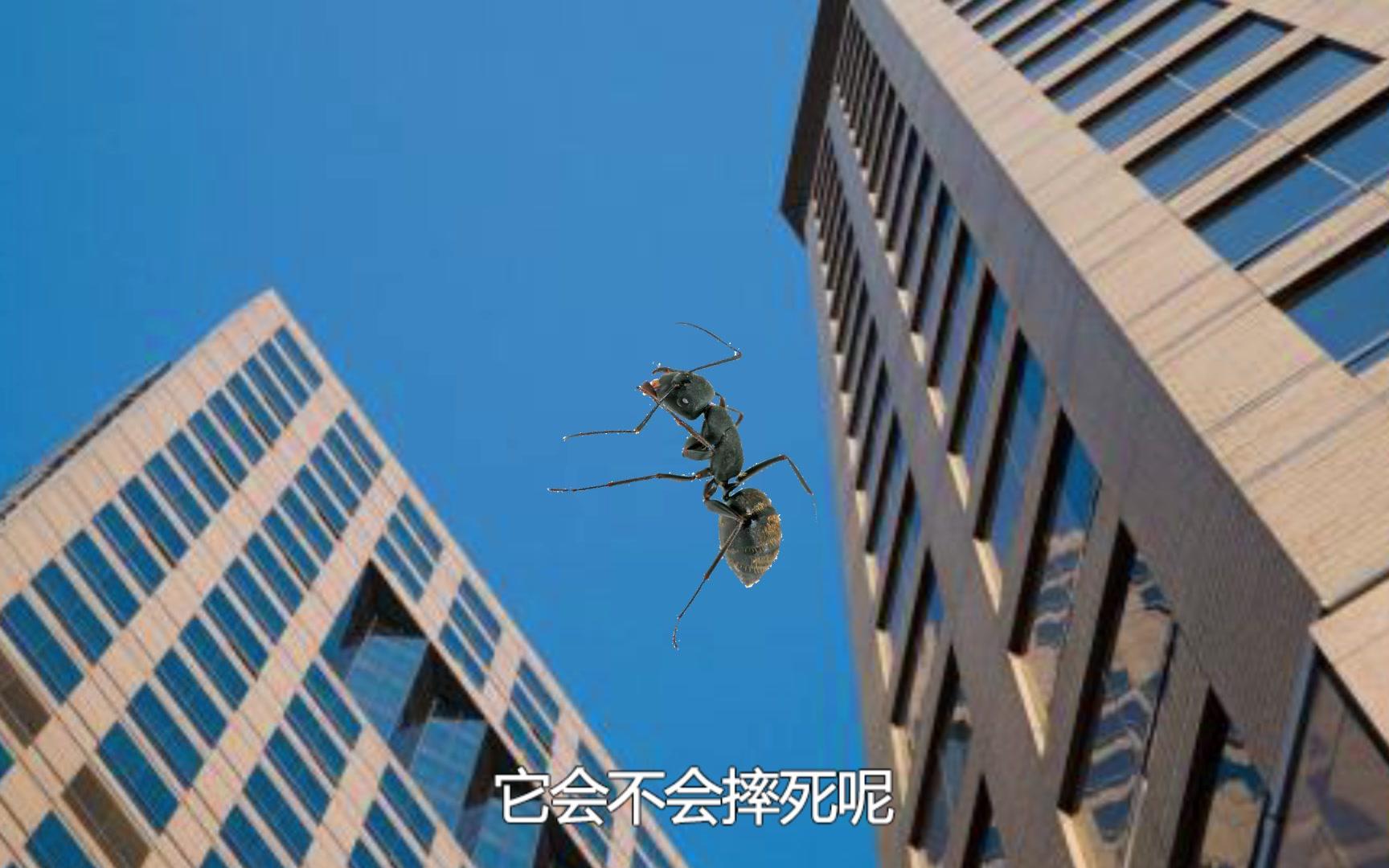 蚂蚁从60米高空坠落 到底是会先饿死还是先摔死?