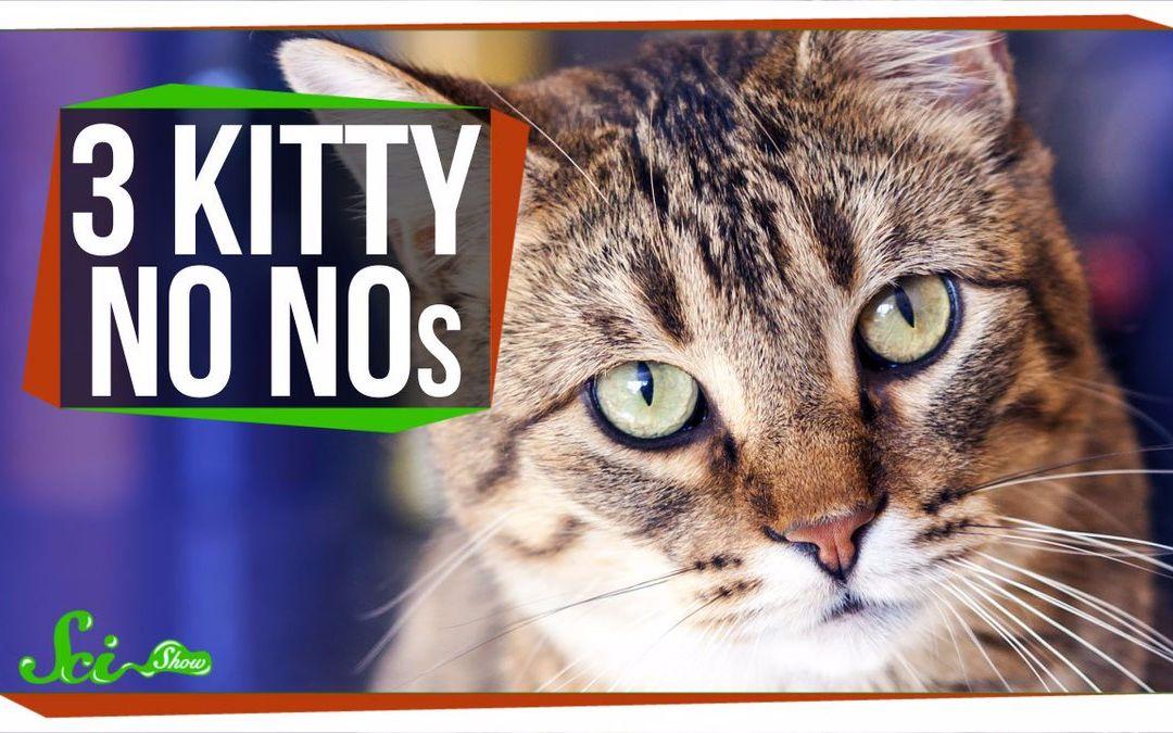 【SciShow】3件你的猫猫不应该做的事情 @圆桌字幕组