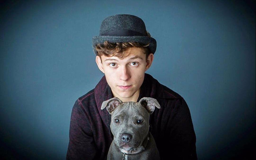 【Tom Holland 荷兰弟】荷兰弟与他那让人羡慕的狗   Tom holland u0026 Tessa The Dog Cute Moments