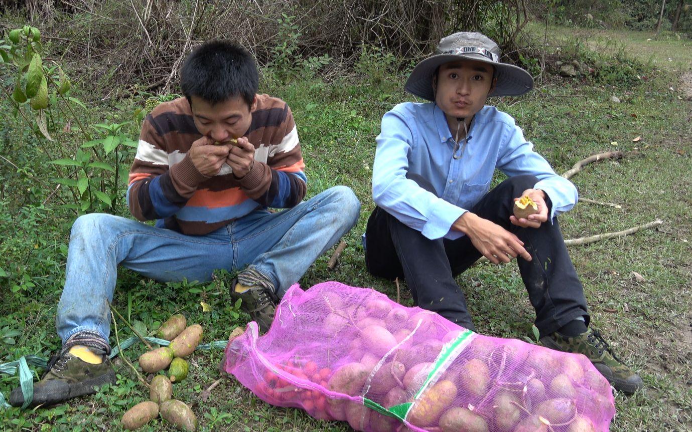 华农兄弟:兄弟俩上山摘野果,一摘100多斤,摘得中午饭都没吃