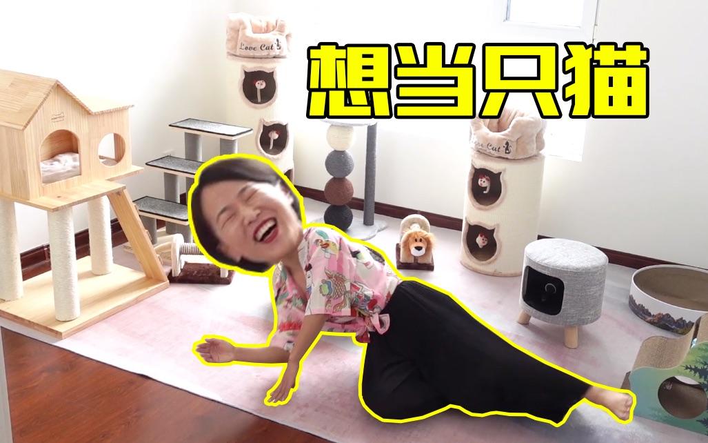 一口气买了10000块钱的猫爬架,女主人高兴的在地上打滚儿!比猫还激动!