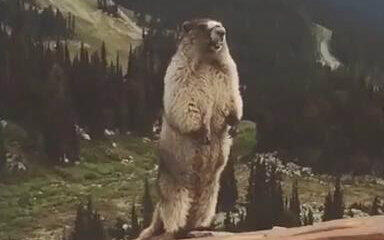 土拨鼠搞笑视频合集_动物圈_v视频_哔哩哔哩表情包民国暴走图片