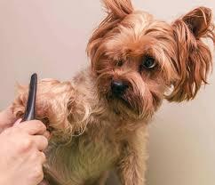 如何让狗狗毛发更漂亮?主人定期给它梳毛,吃这5样食物