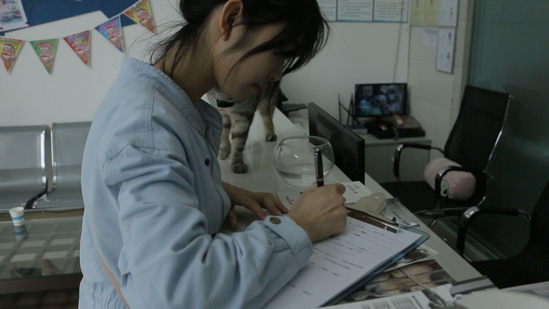 猫咪被绝育,女主人悲痛欲绝全程记录,竟然做成搞笑记录片