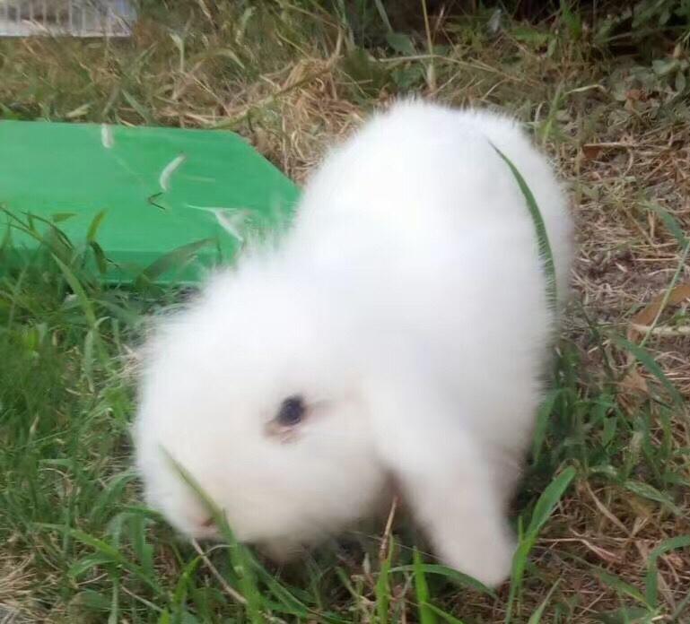 草干妈_那一年,小八与兔干妈一起吃草的时光(ω)