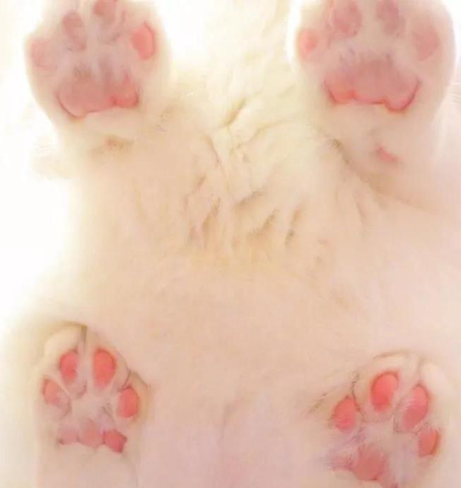 猫爪肉垫_熊肉垫_猫爪