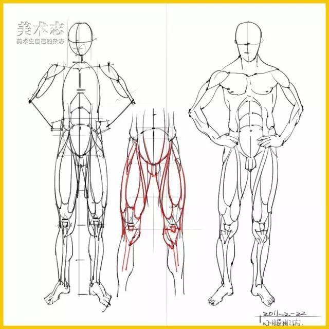 下肢结构的画法分析,不会画腿的同学赶紧了,转需收藏