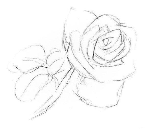 素描入门:玫瑰素描简单画法步骤图片