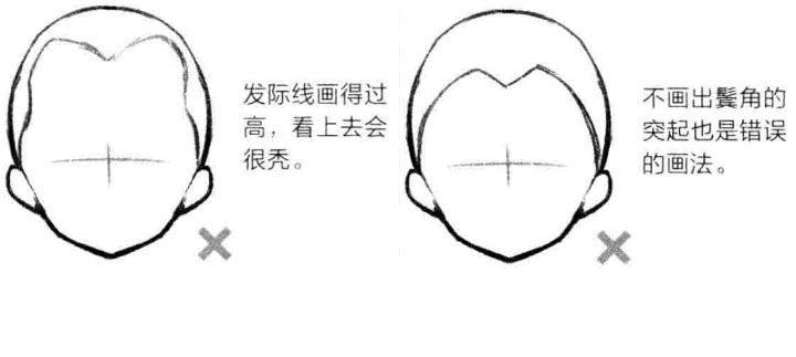 发际线的背侧范围图片