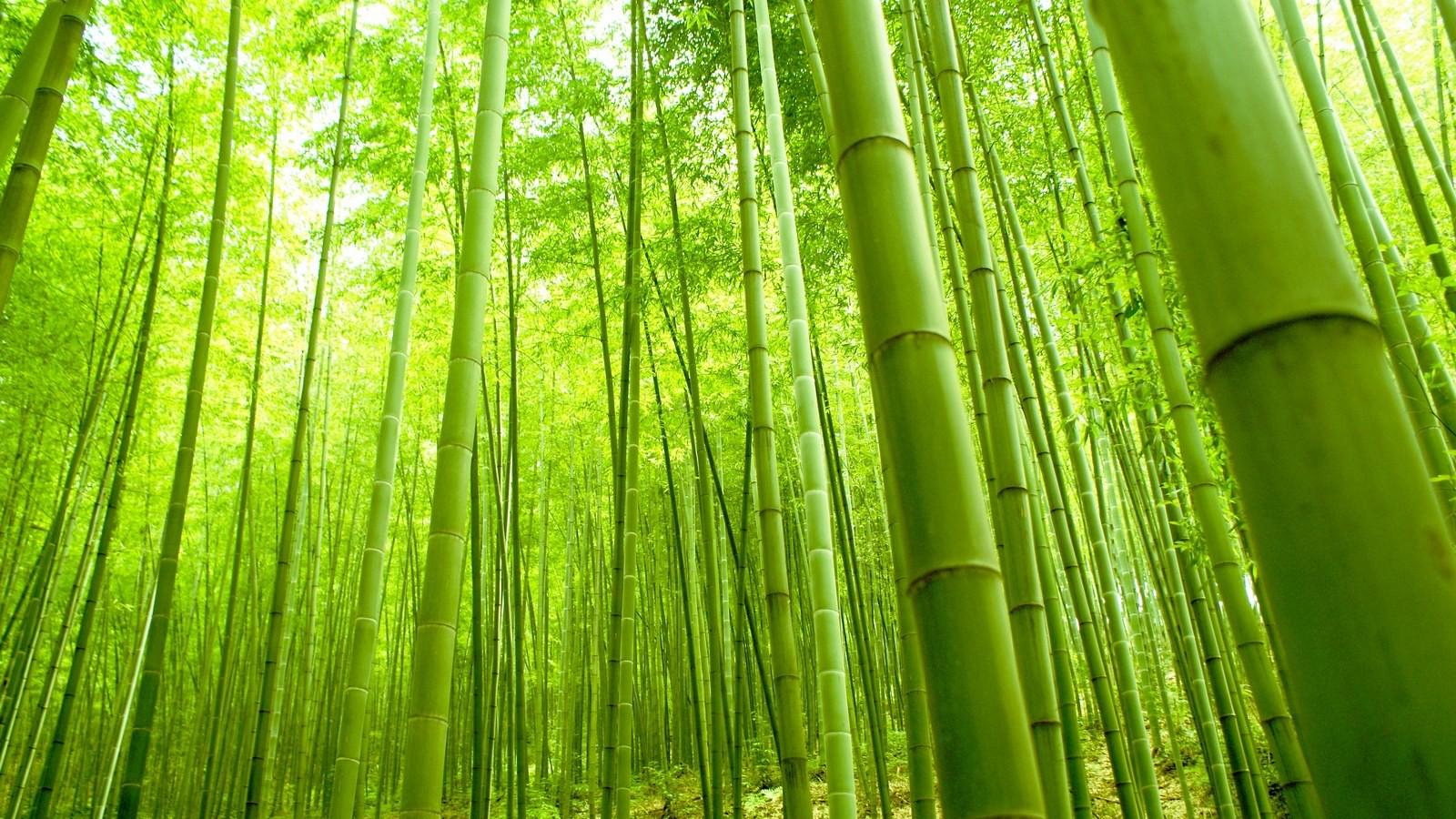 干货教学,教你野外如何利用草皮和竹子制作超酷的庇护