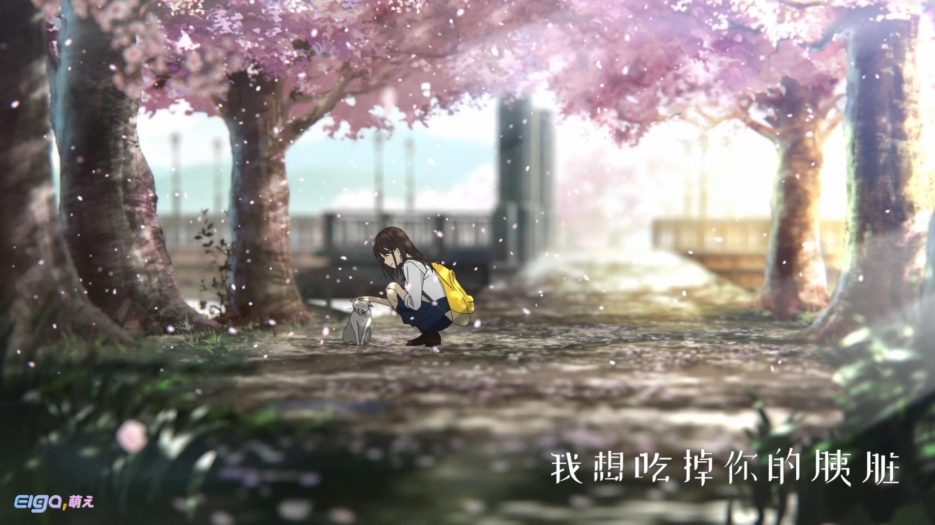 日系绝美动画电影《我想吃掉你的胰脏》亮相腾讯全球