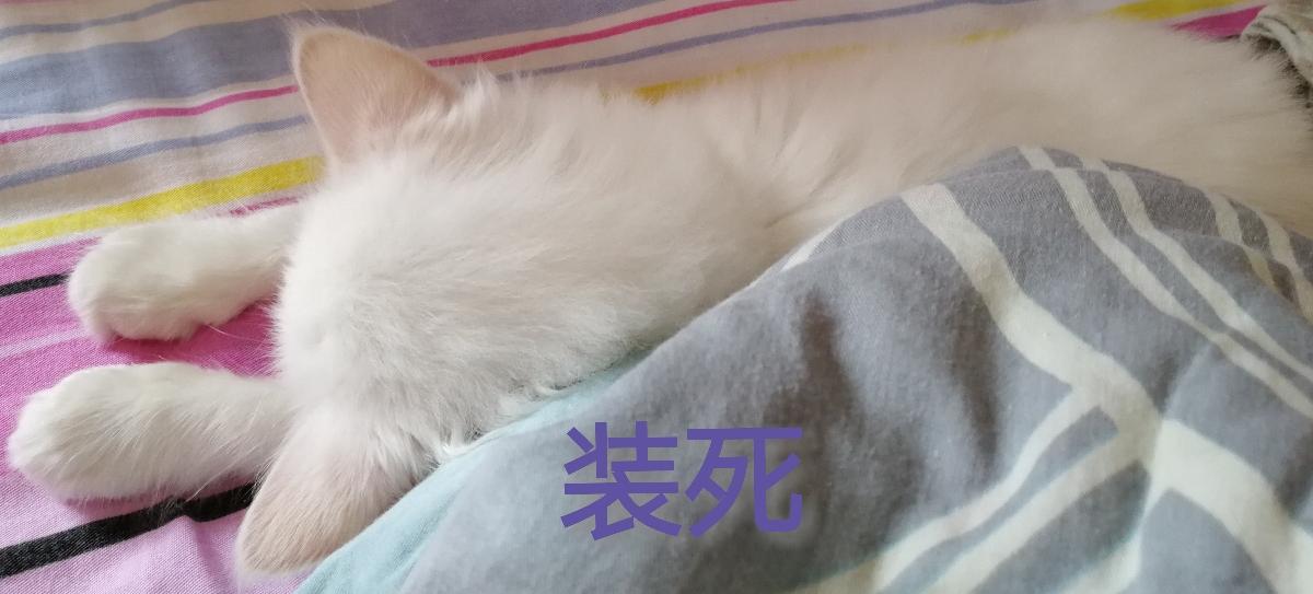 自家猫与猫咖猫表情合集表情包情侣a表情图片