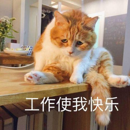 吸猫毛巾纯棉洗脸家用网红