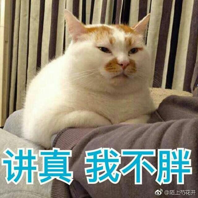 小可爱,猫咪表情包要么?②图片
