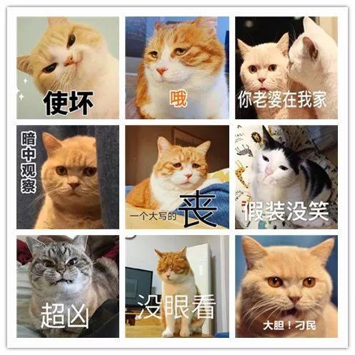我们为啥老爱用猫的表情包呢?图片