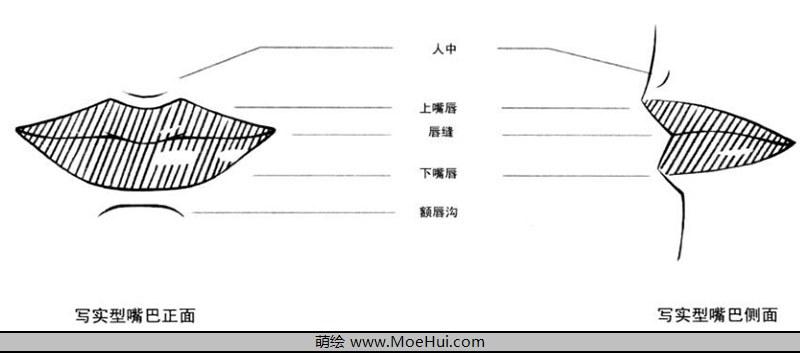 这一节中,我们来介绍嘴巴的画法,首先介绍一下写实类嘴巴的画法