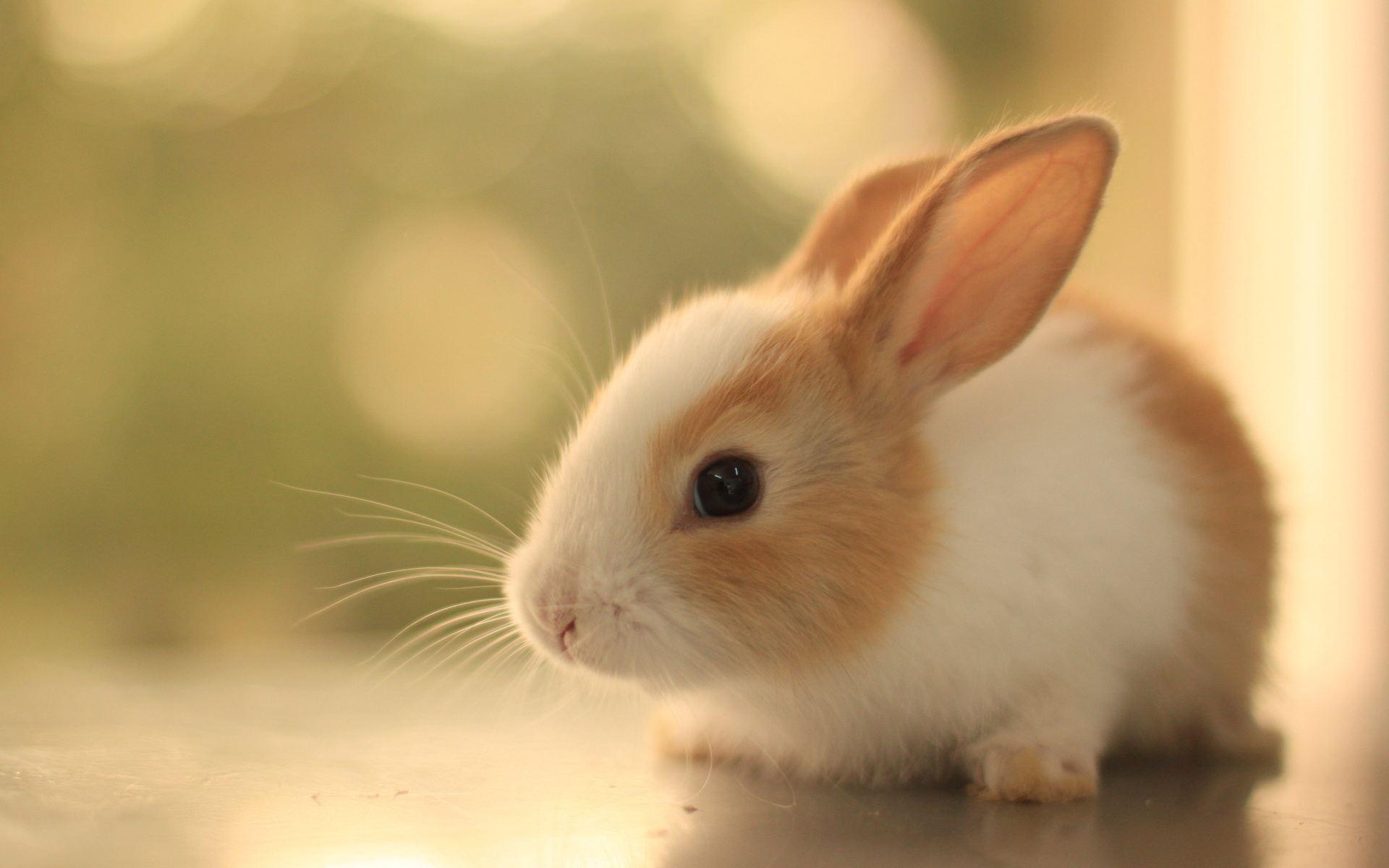 乳液兔子动物1920_1200澳门伊思蜗牛壁纸图片