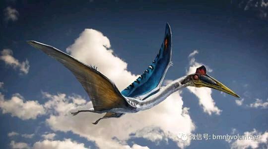 恐龙科普#5世界上已知最大的翼龙:风神翼龙