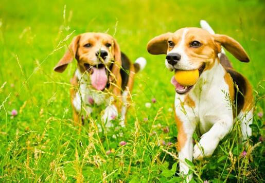 如何通过玩游戏的方式与狗狗交流感情