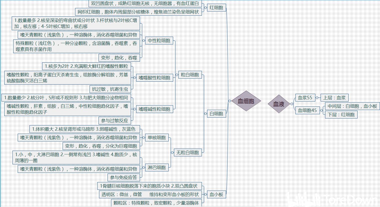 组织学与胚胎学(部分) 思维导图