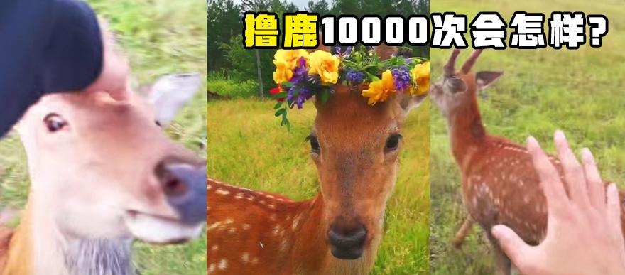 鹿:你別過來!