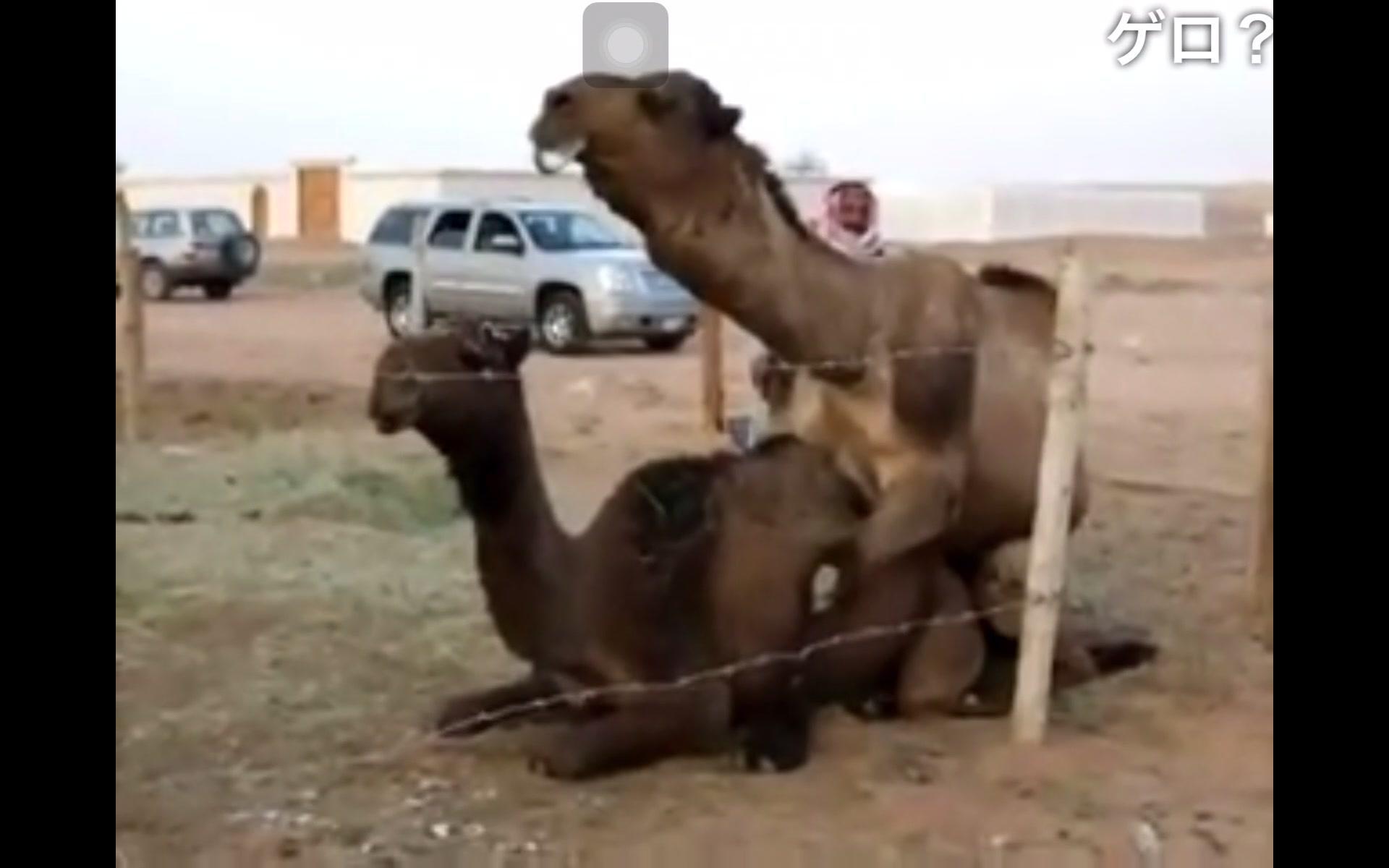 人类性交视频_日本人看骆驼交配_哔哩哔哩(゜-゜)つロ干杯~-bilibili