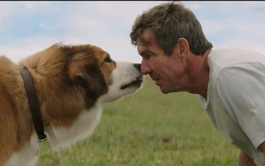 人狗电影哪里有_这只狗看哭了全球10亿人,解读电影《一条狗的使命》